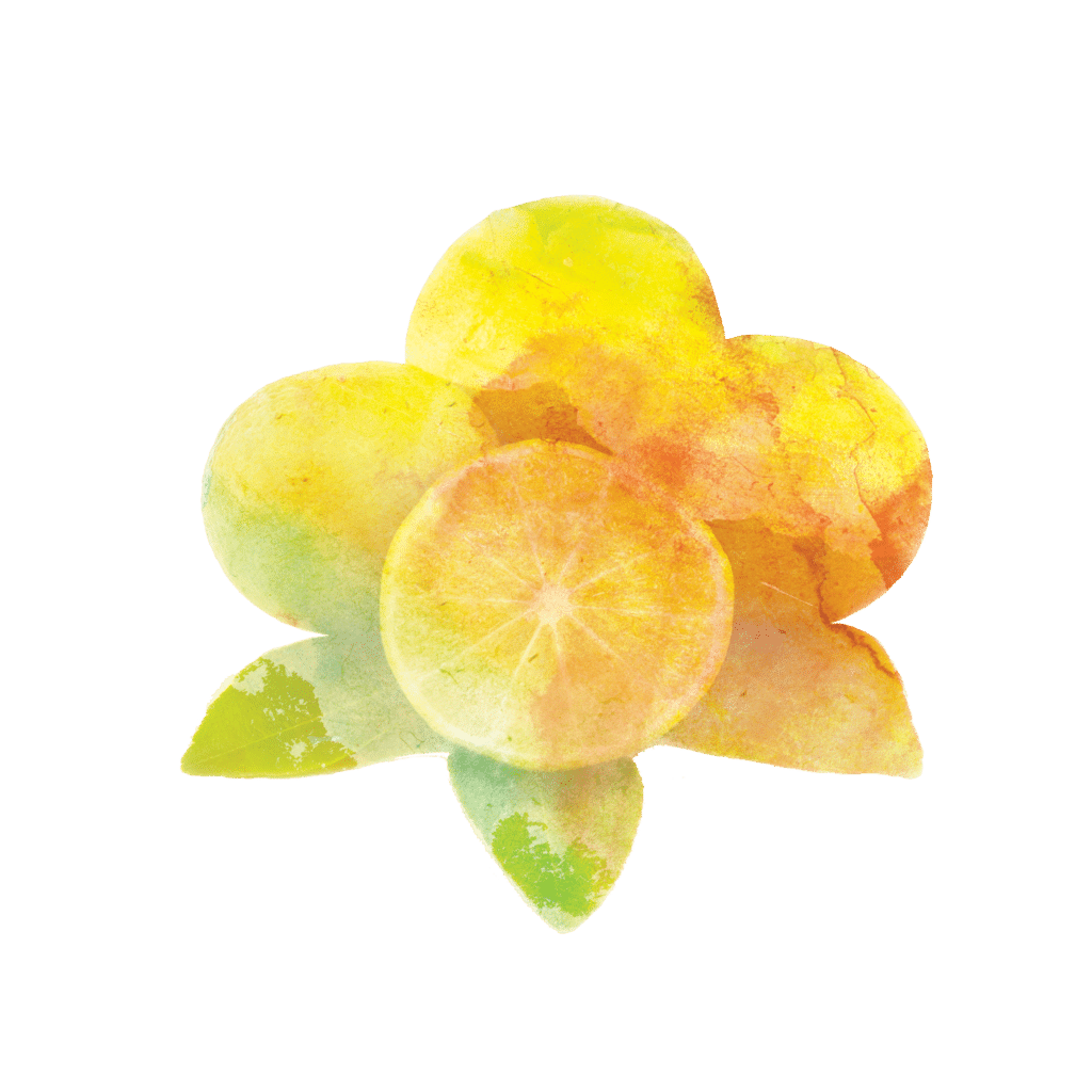 Visuel Citron Citronelle Aquarelle , élément graphique, charte graphique, identité visuelle , be mood
